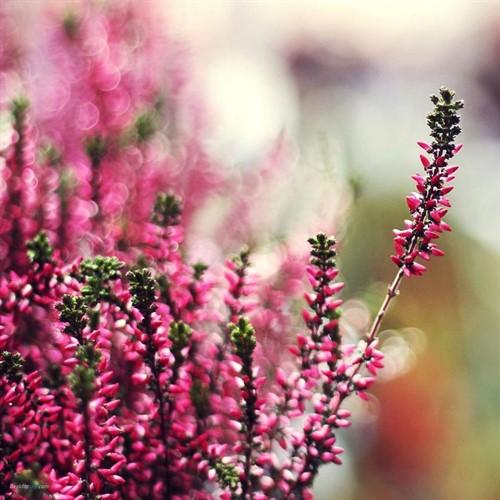 Floral de Heather