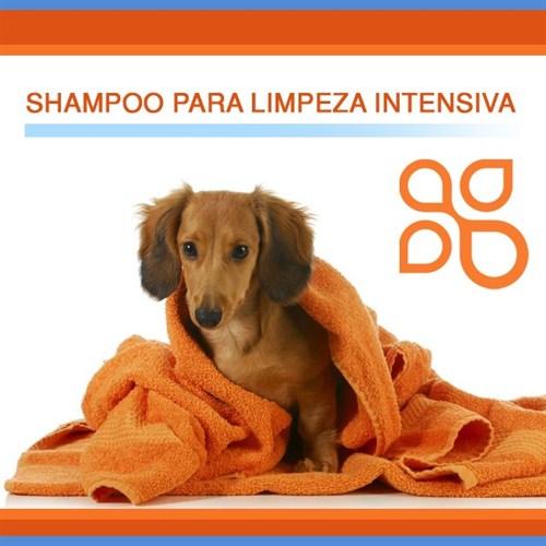 Shampoo para limpeza intensiva