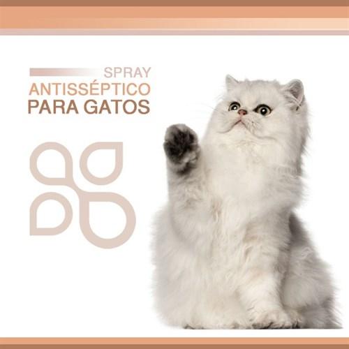 Spray antisséptico para gatos