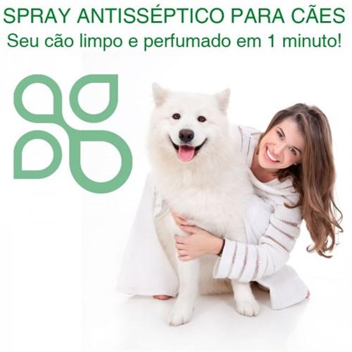 Spray antisséptico para cães - essência de bambu