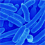 Lactobacillus Acidophilus - 1 bilhão 30 cápsulas