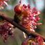 Floral de Elm