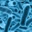 Lactobacillus Gasseri - 1 bilhão 30 cápsulas