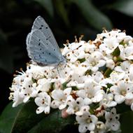 Floral de Holly