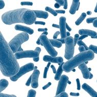Lactobacillus Lactis - 1 bilhão 30 cápsulas