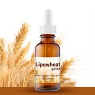 Lipowheat Gotas 15ml