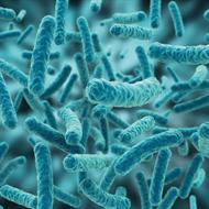 Lactobacillus Plantarum - 1 bilhão 30 cápsulas