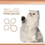 Spray antisséptico para gatos