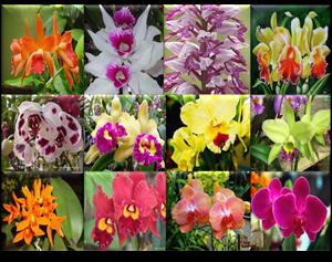 Empresa da Rede SEI Eventos realiza a Expo Orquídeas