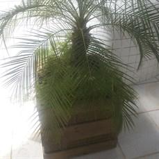 Cachepot de madeira rústica