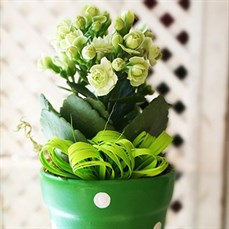 Arranjo de flor Mulher Charmosa