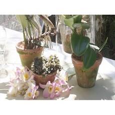 Aluguel de vaso de cerâmica