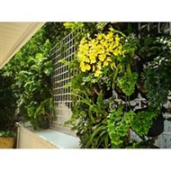 Construção de Jardins Verticais