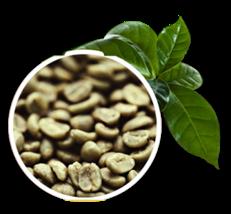 Green Coffee - Café Verde Emagrecedor