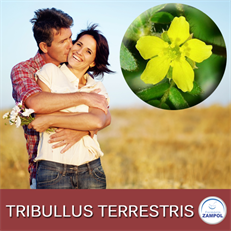 Tribullus Terrestris 500mg com 60 Capsulas