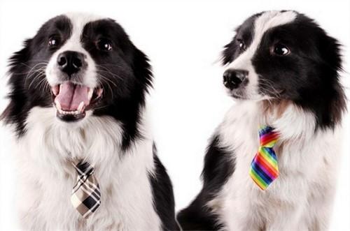 Gravata Para Cachorros e Gatos - Ajustável