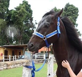 Cabresto Personalizado Luxo com nome do cavalo