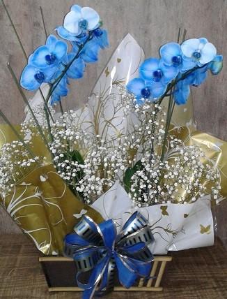 Lindas Duas Orquídeas Azuis no cachepot de madeira