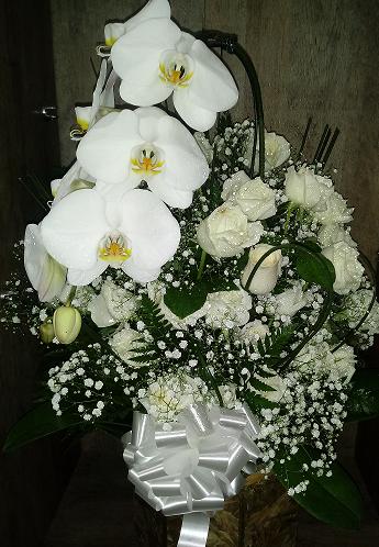 Linda Orquídea com Rosas Brancas