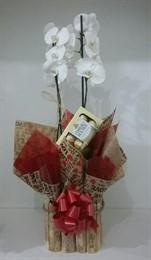 Orquídea Phalaenopsis com Ferrero Rocher 8 unidades