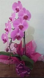 Linda Orquídea Cascata colorida