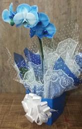 Linda Orquídea azul