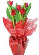 Lindo vaso de tulipas