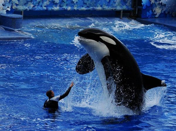 SeaWorld - Oferta