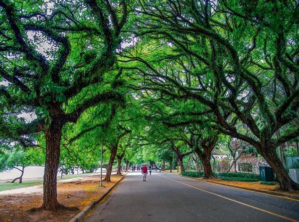 Tour Parque Ibirapuera e Museus