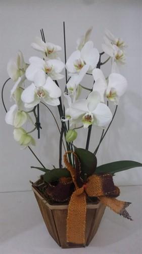 Arranjo com duas Orquídeas Phalaenopsis