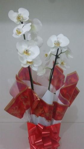 Linda Orquídeas Phalaenopsis (VÁRIAS CORES)