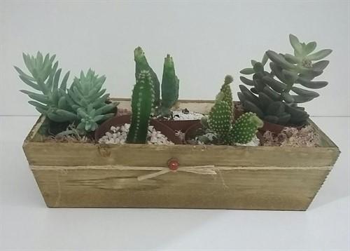 Mini Deserto